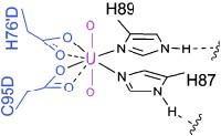 Uranium-binding protein